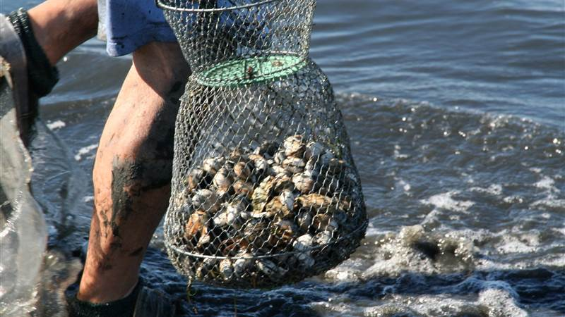 clams fished in front of vlt img_0965